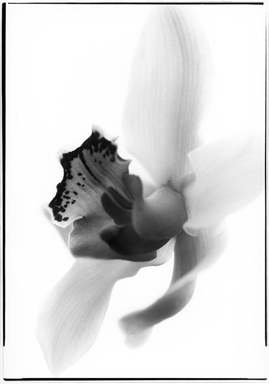 Orchid-2_web.jpg