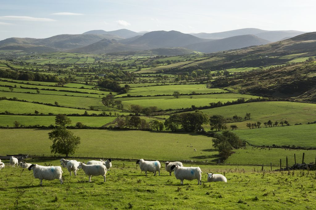 The rural landscape of the Mournes are makes for fantastic cycling!