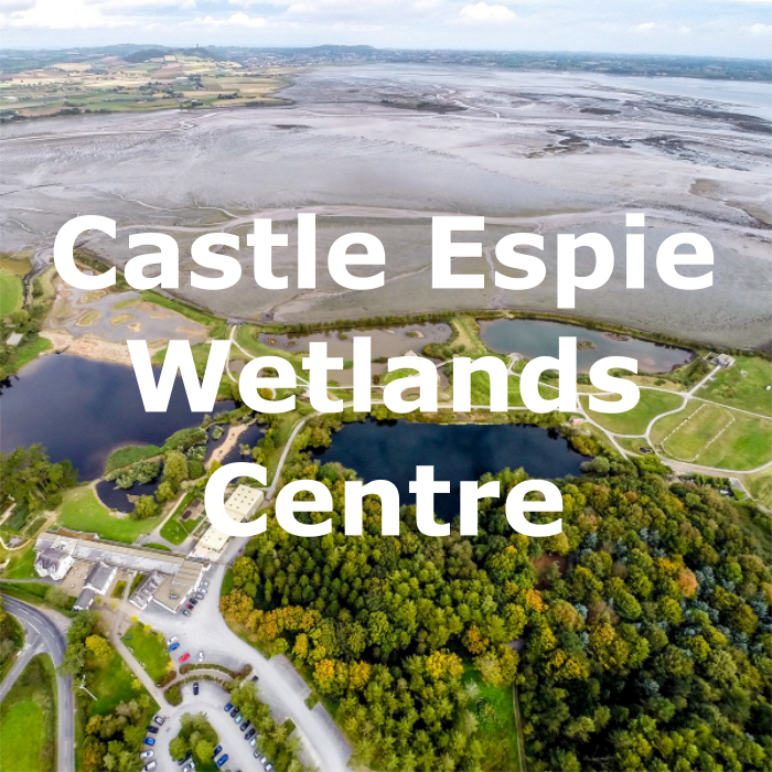 castle-espie.png