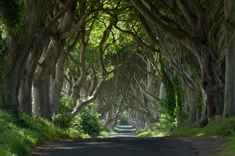 The Dark Hedges (Game of Thrones)