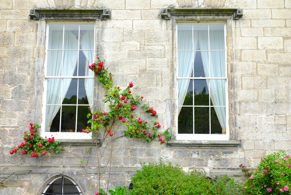 windows-1.jpg