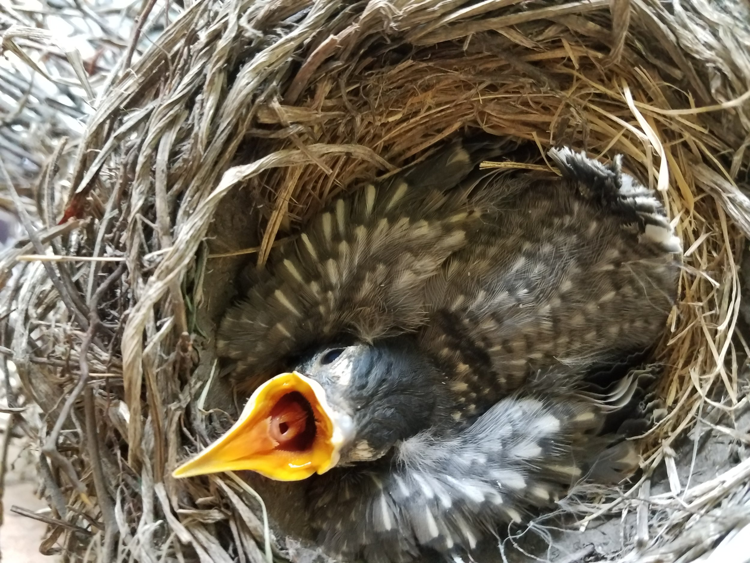 How delightful to have birds nesting i your garden…..