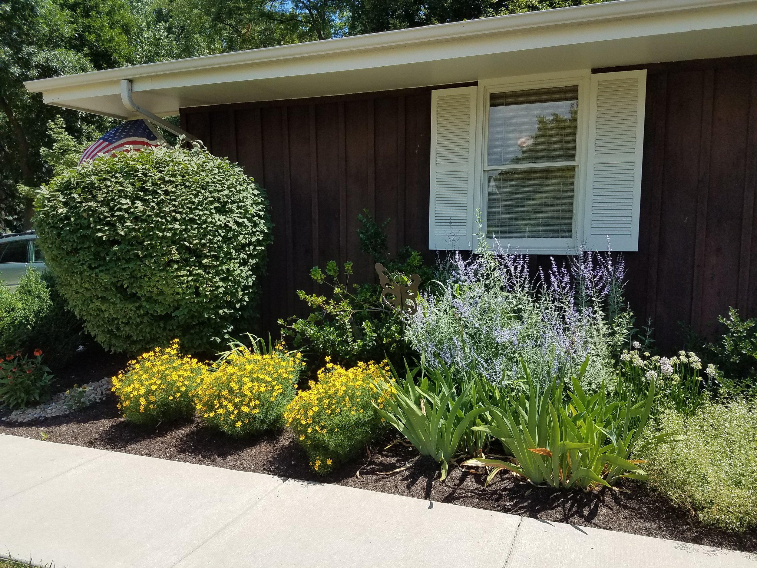 Try these! - Native plants for color and variety