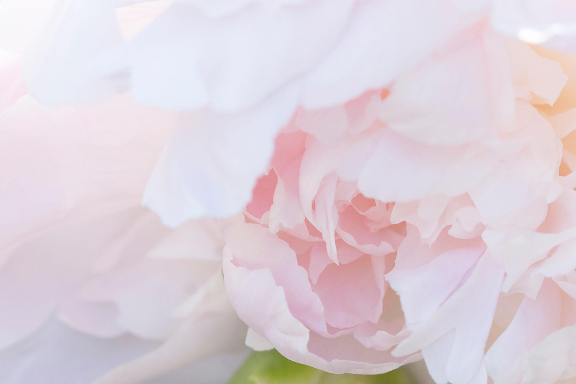 Botanical Photography Prints For Sale.jpg