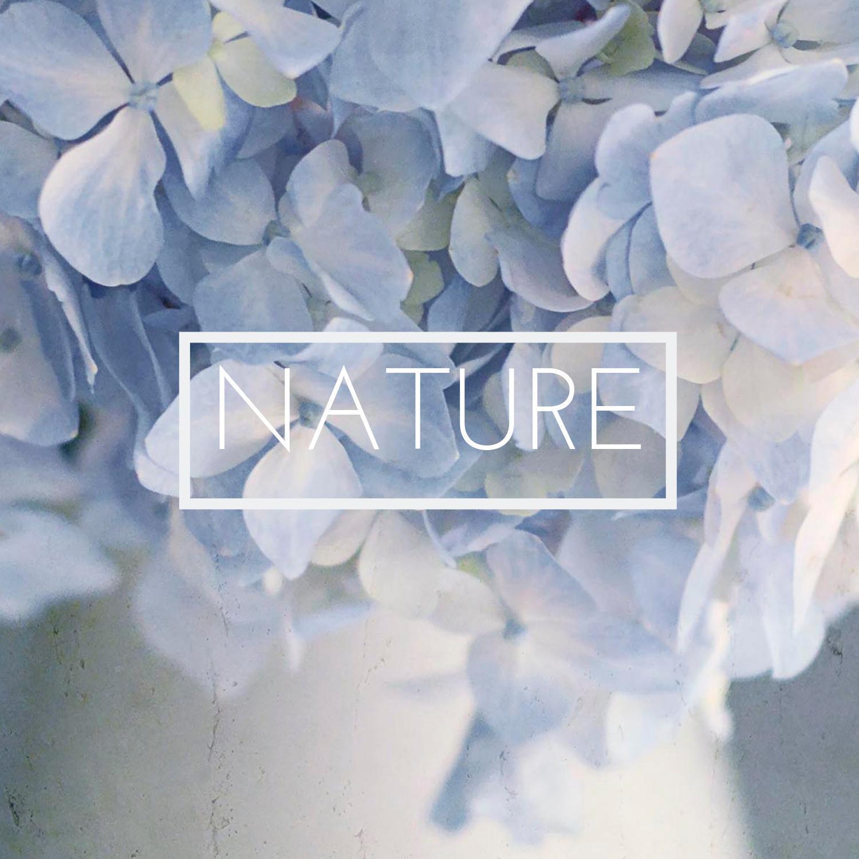 Nature Botanical Fine Art Photography Prints