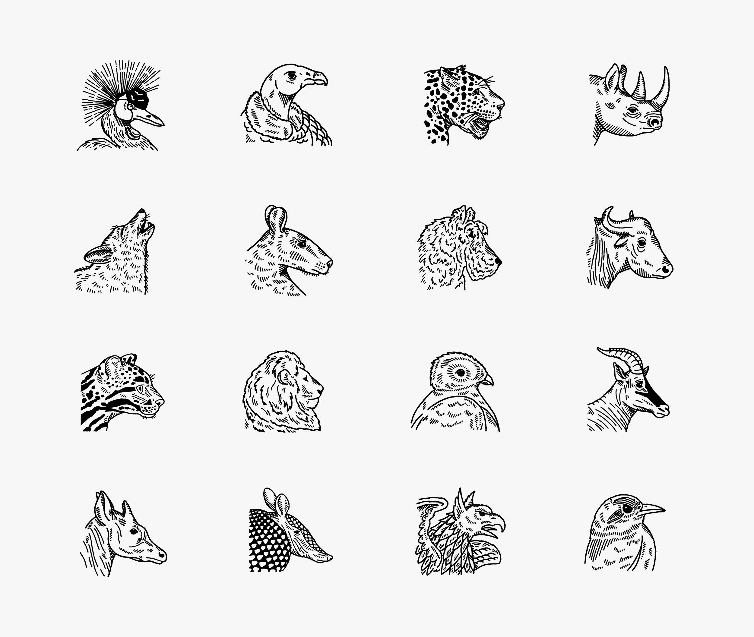 Studio Freight - Roosevelt Coffee Animal Illustrations