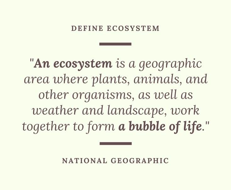 ecosystem.jpg
