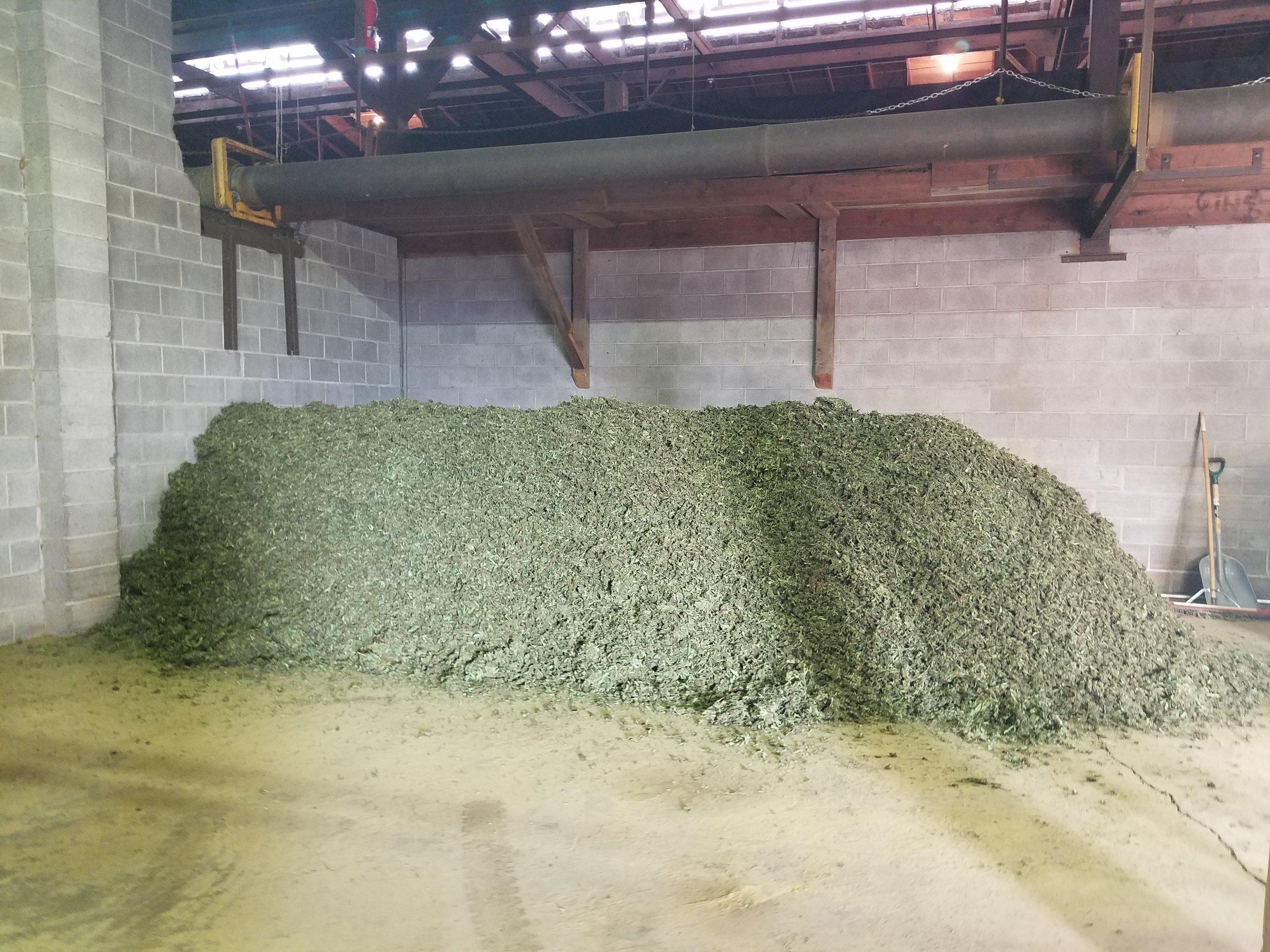 Drying - Bulk Dried Hemp