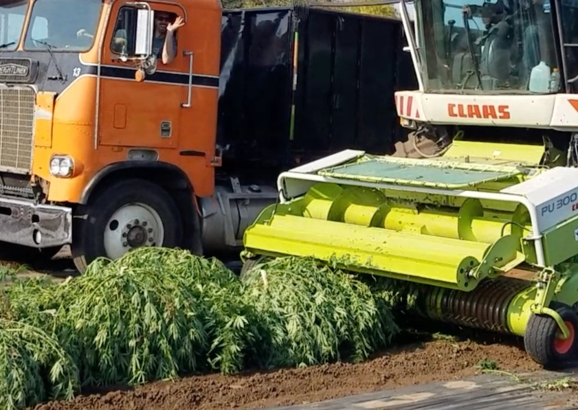 Harvest - Hemp Machine Harvester 2