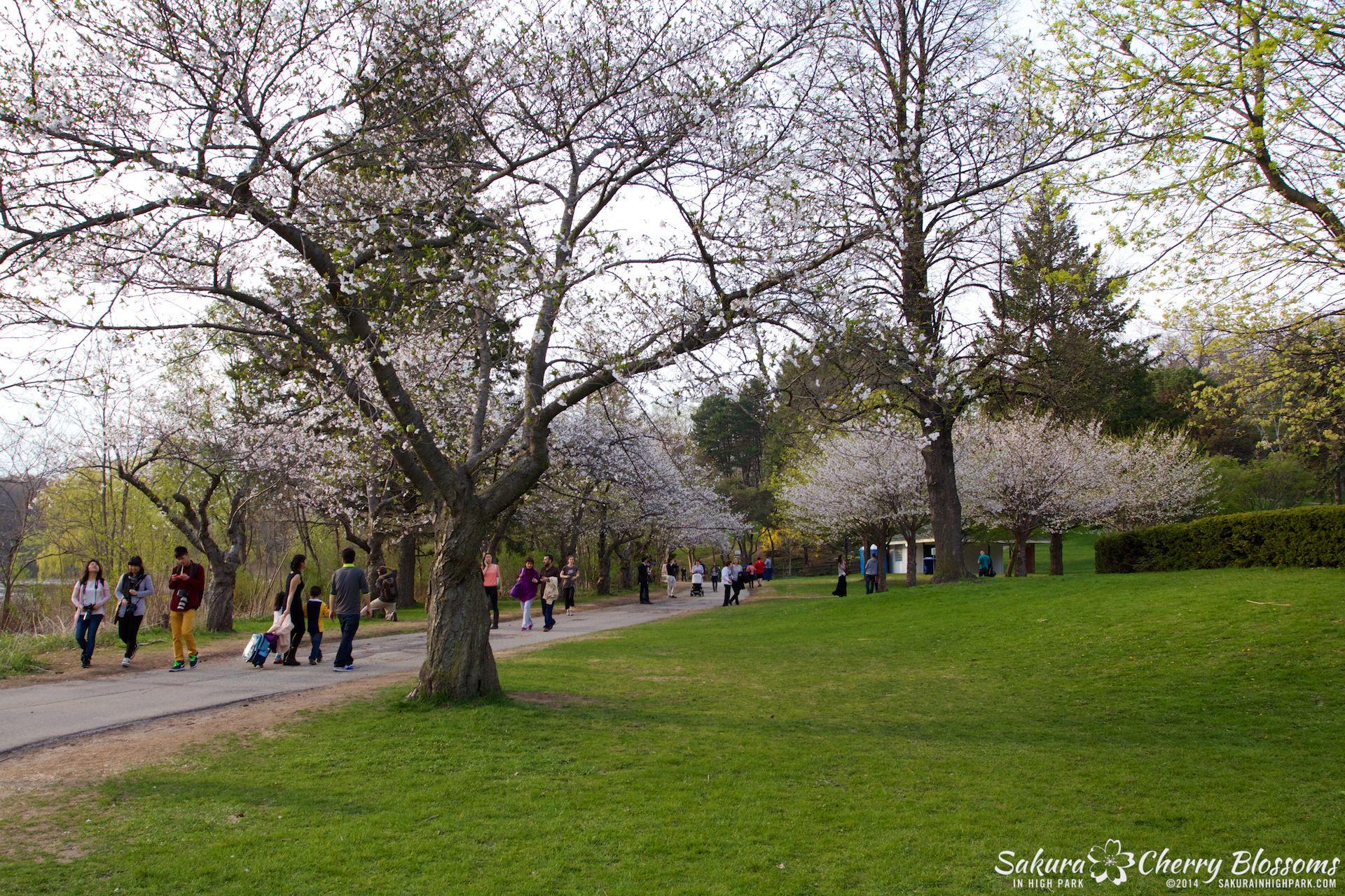 SakuraInHighPark-May1314-447.jpg