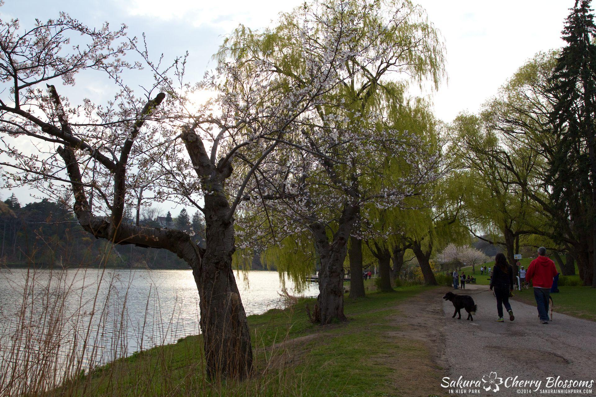 SakuraInHighPark-May1314-423.jpg