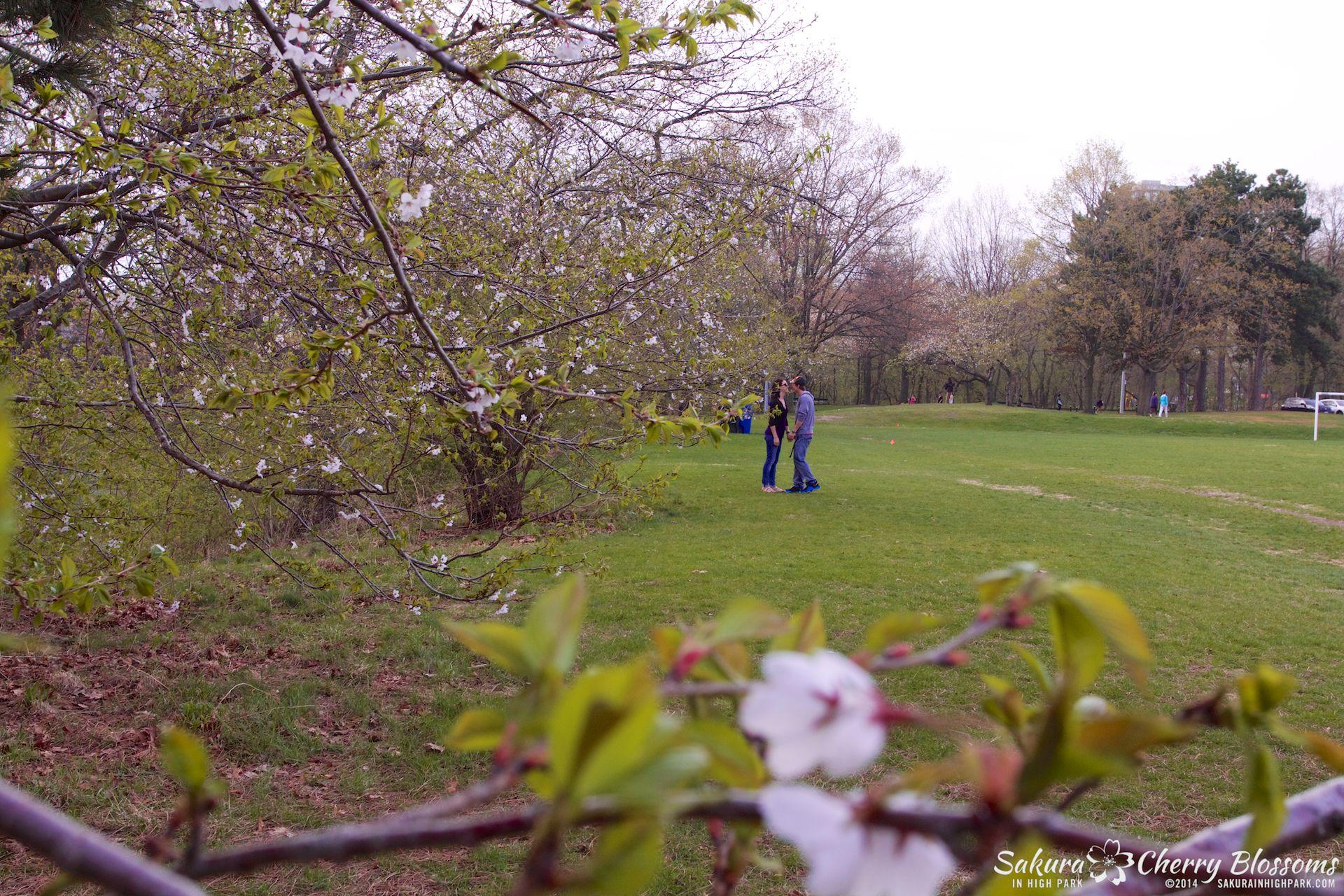 SakuraInHighPark-May1314-525.jpg