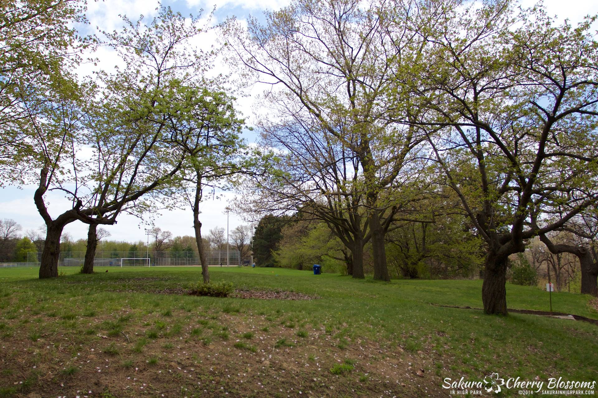 SakuraInHighPark-May1614-387.jpg