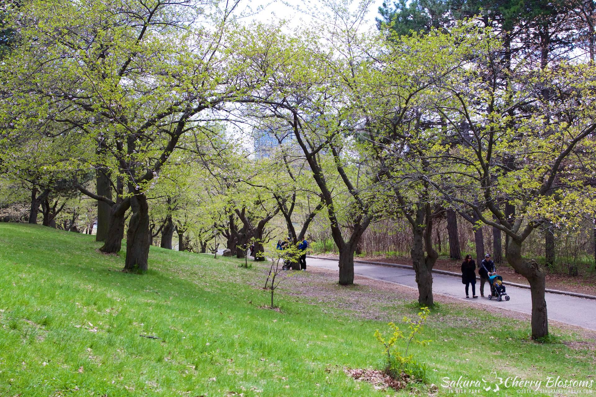 SakuraInHighPark-May1614-480.jpg