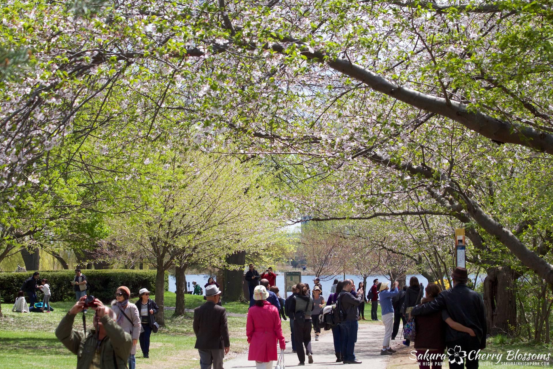 SakuraInHighPark-May1614-568.jpg