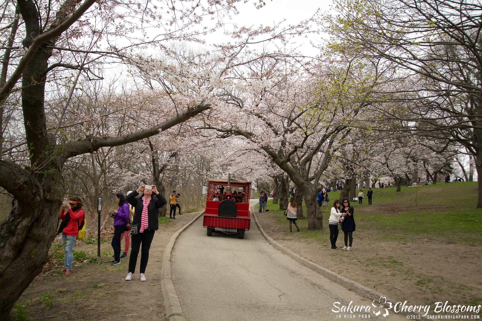 SakurainHighPark-May515-2076.jpg