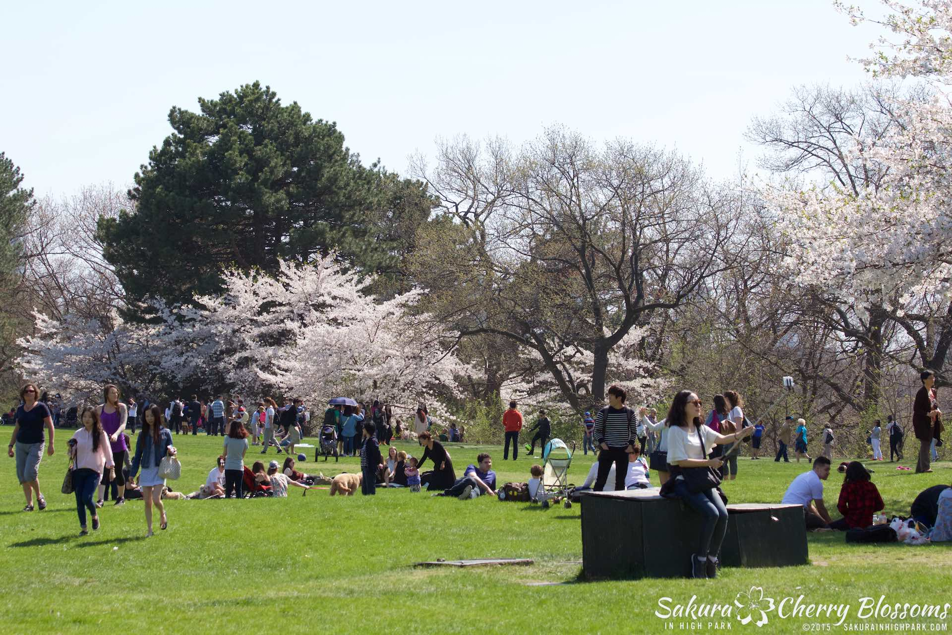 SakurainHighPark-May715-2339.jpg