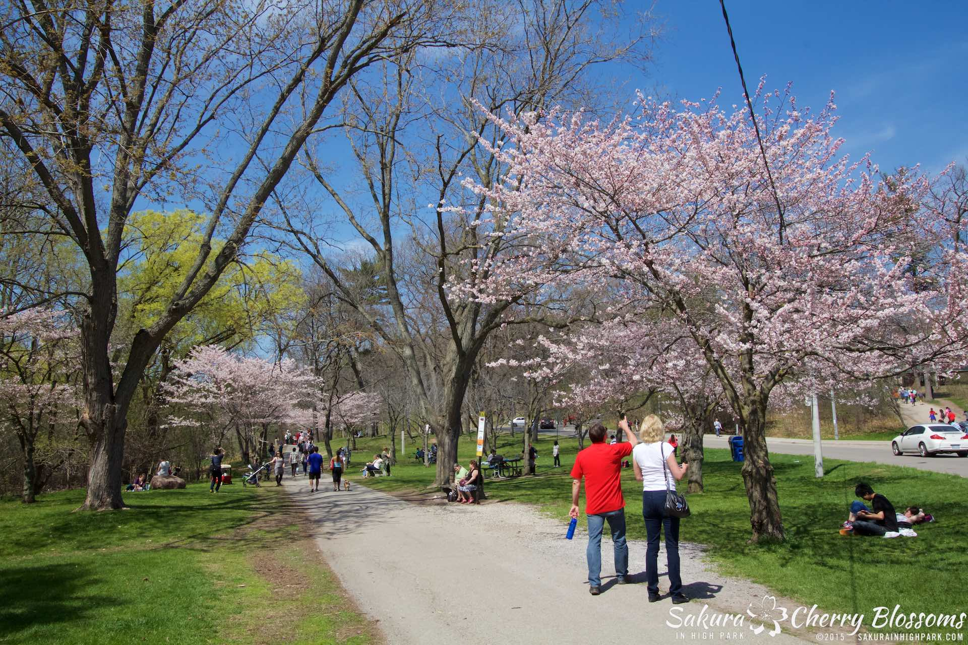 SakurainHighPark-May715-2131.jpg
