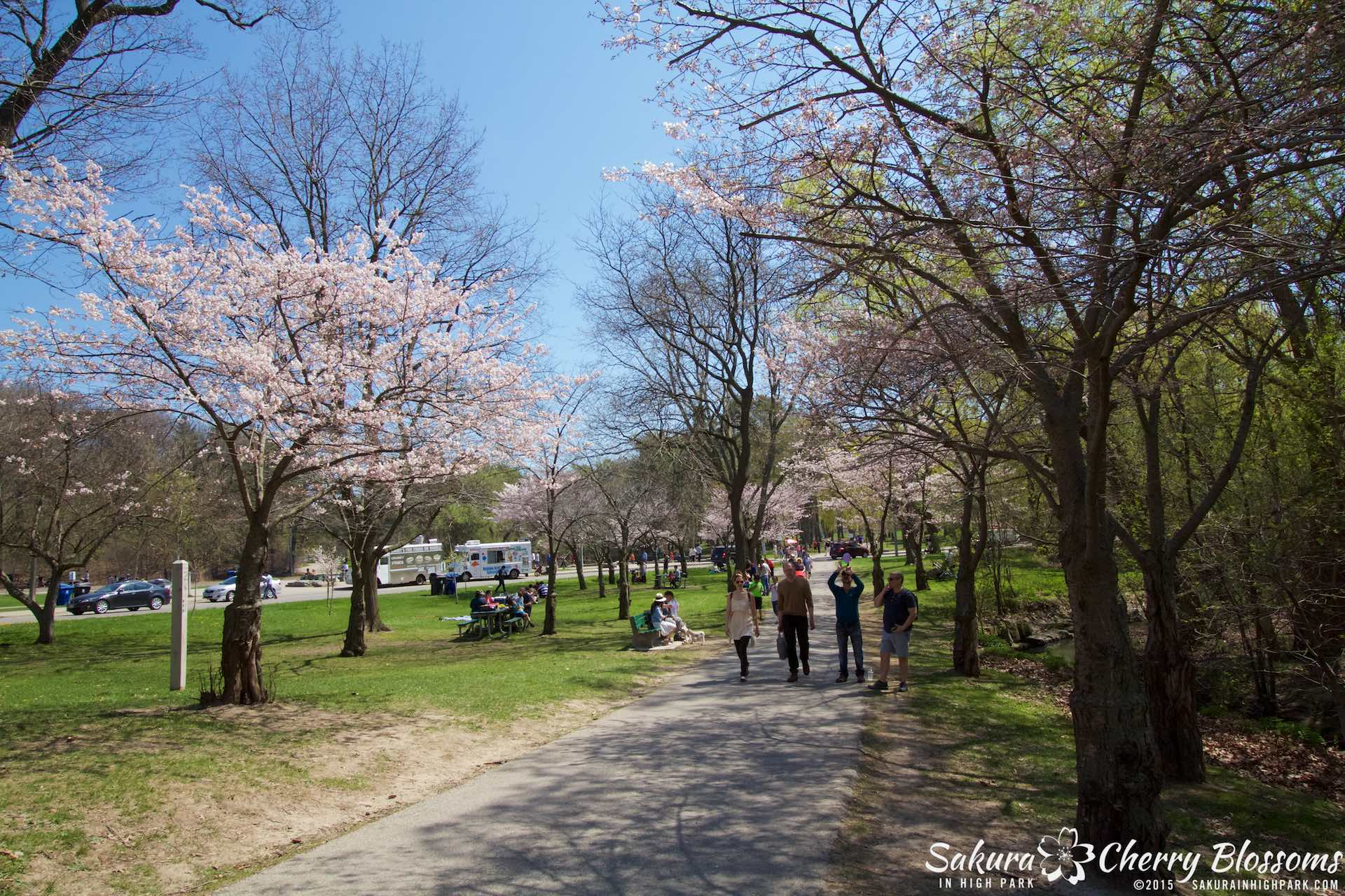 SakurainHighPark-May715-2122.jpg