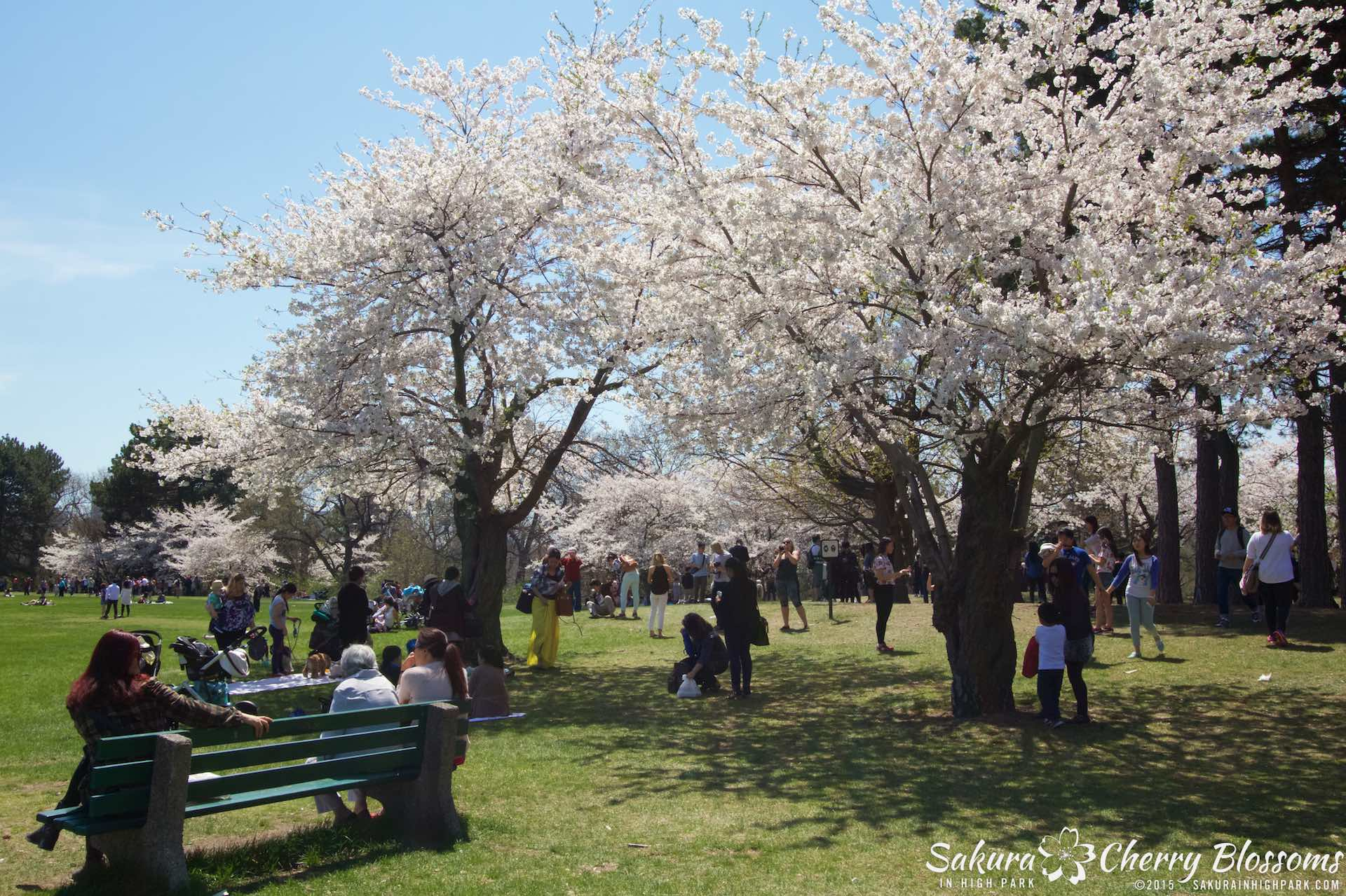 SakurainHighPark-May715-1911.jpg