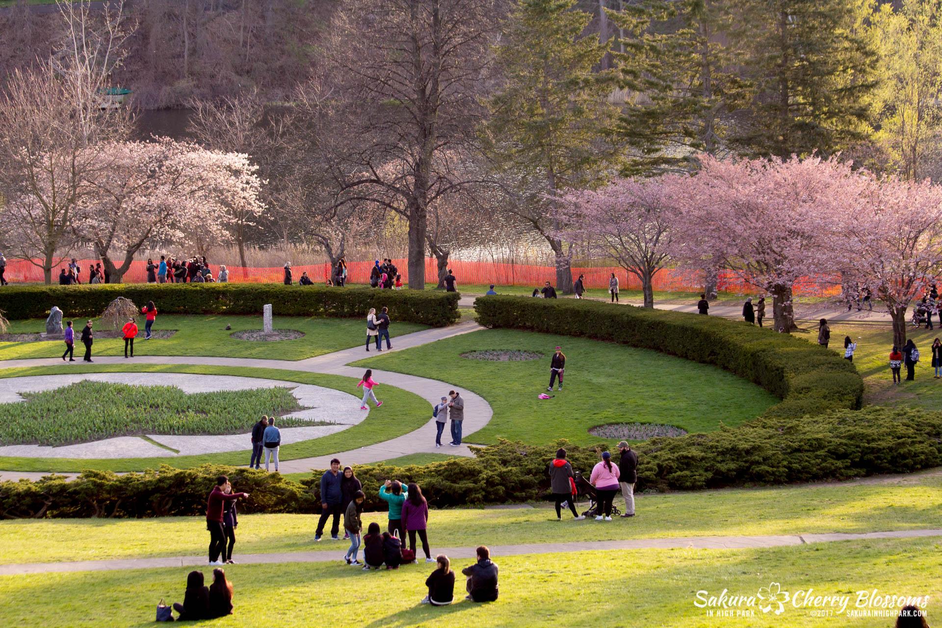 Sakura-Watch-April-24-2017-bloom-has-begun-with-more-to-come-27.jpg