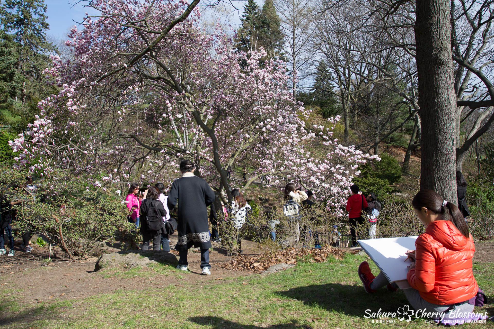 Sakura-Watch-April-28-2017-full-bloom-throughout-High-Park-5718.jpg