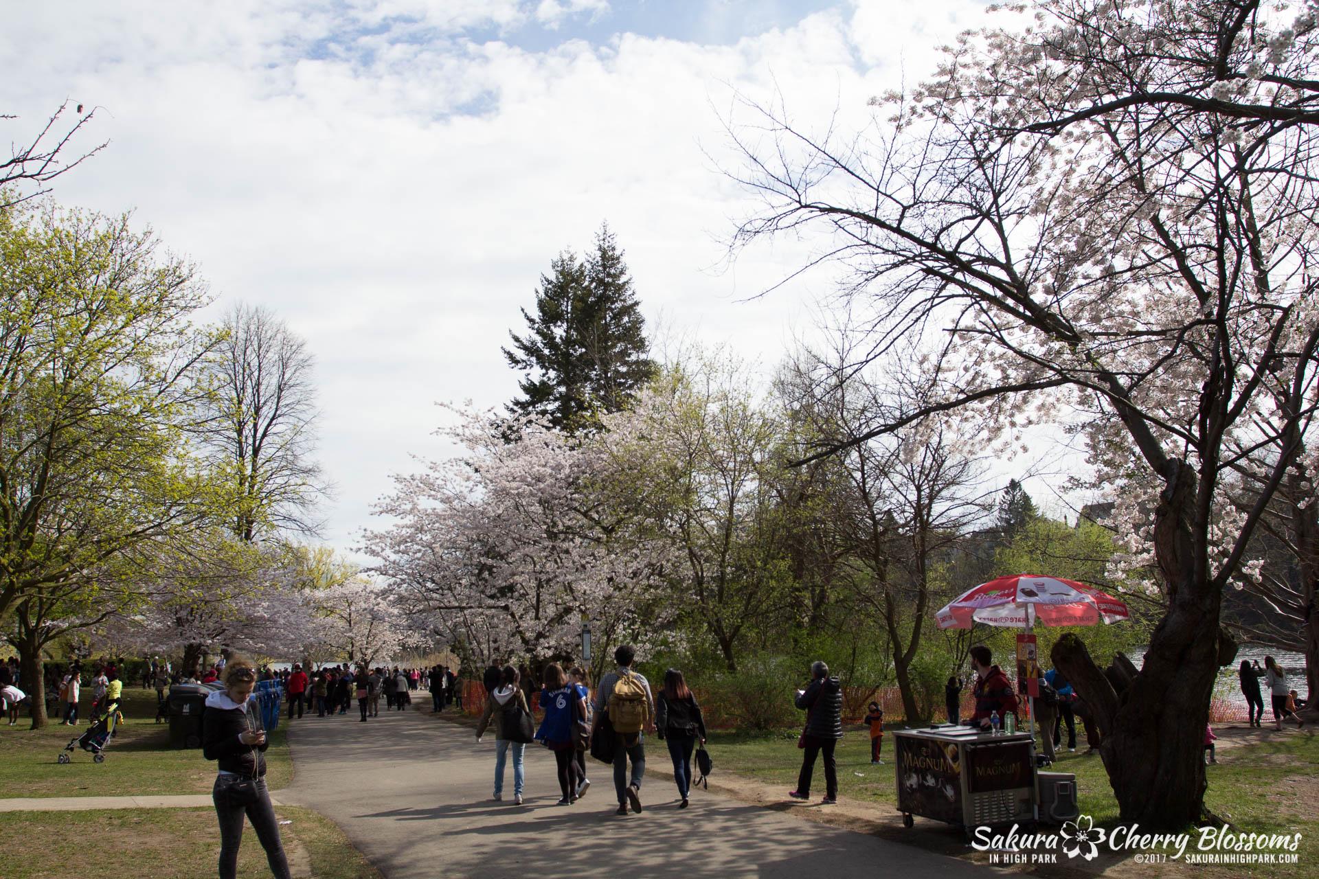 Sakura-Watch-April-28-2017-full-bloom-throughout-High-Park-5768.jpg