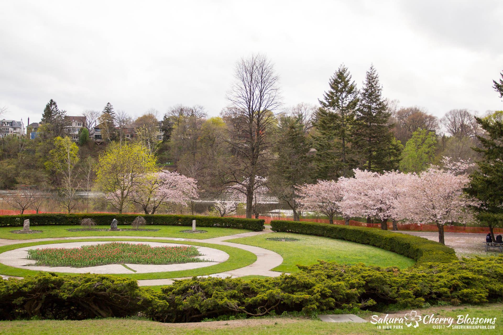 Sakura-Watch-May-2-2017-cherry-blossoms-falling-in-High-Park-218.jpg