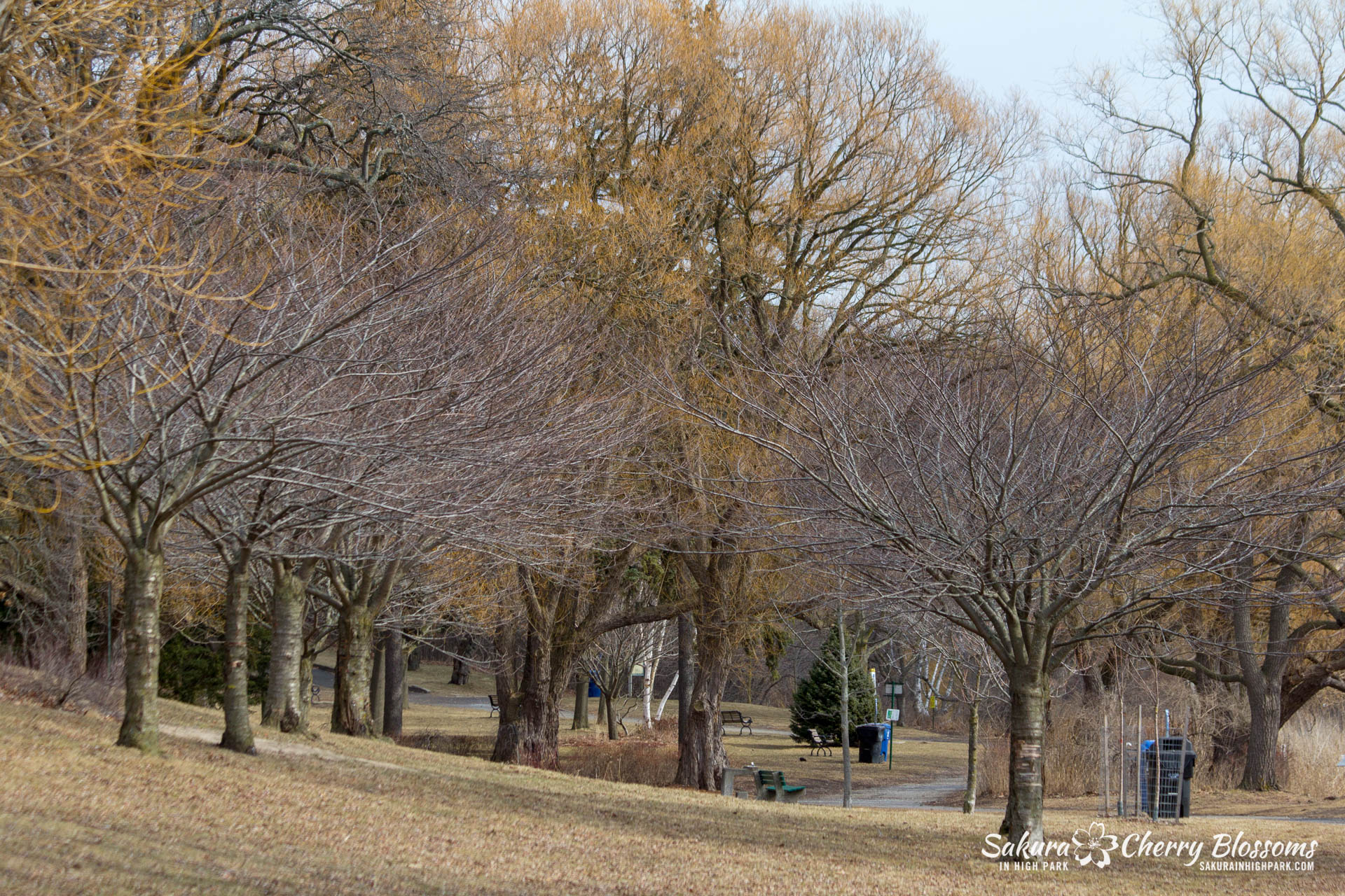 SakuraWatch-Mar14_18-5.jpg