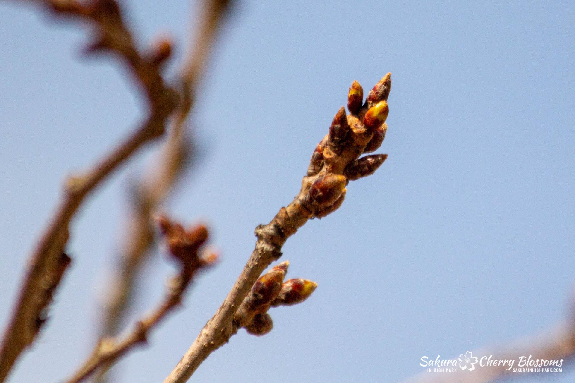 Sakura-Watch-April-5-2018-79.jpg