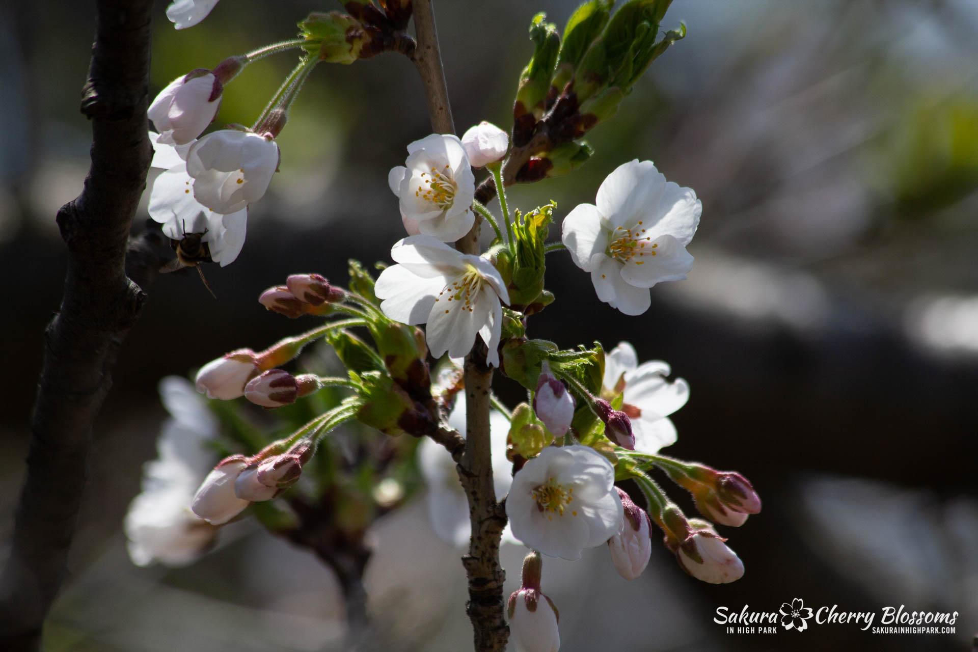 Sakura-Watch-May-5-2018-139.jpg