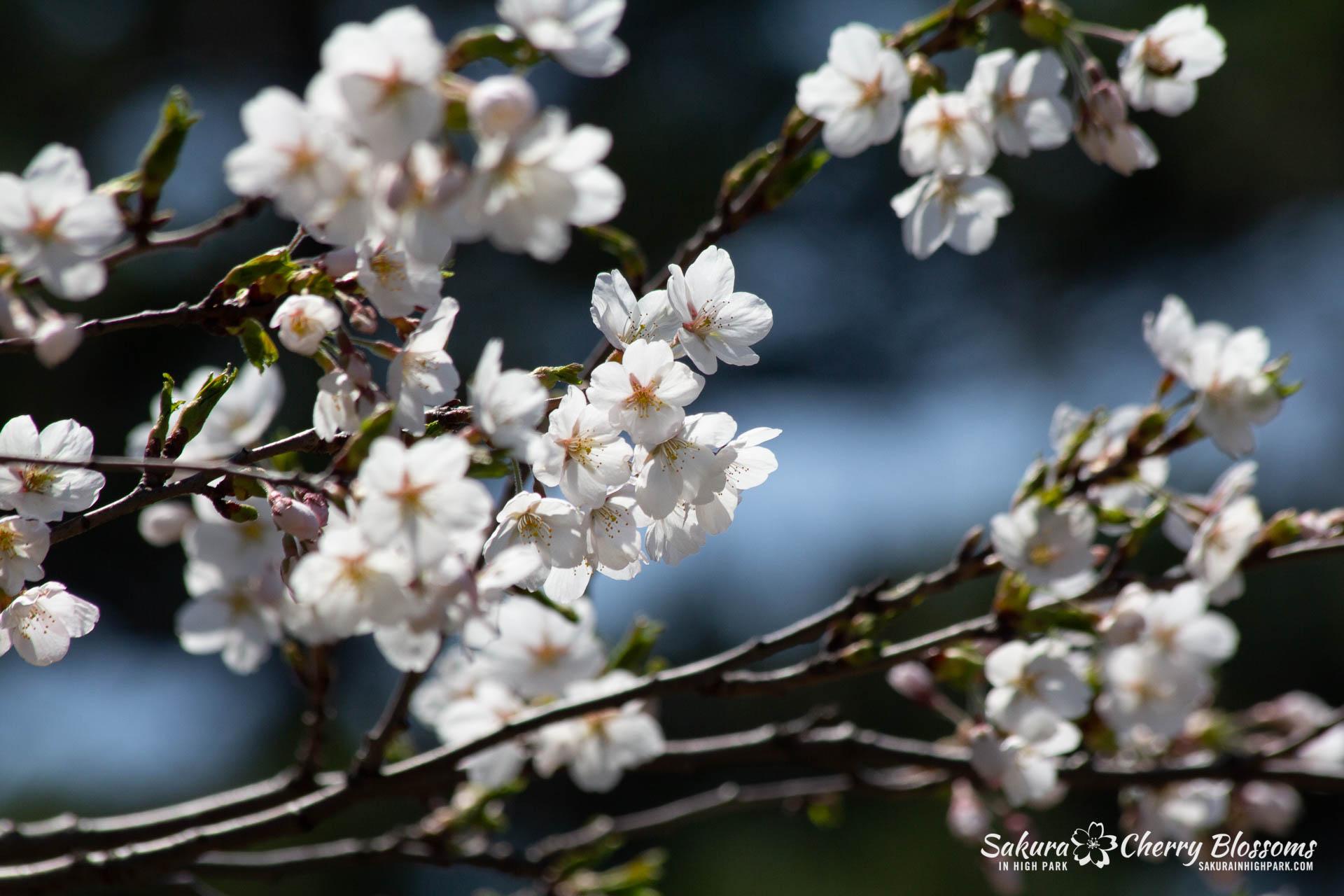 Sakura-Watch-May-5-2018-122.jpg