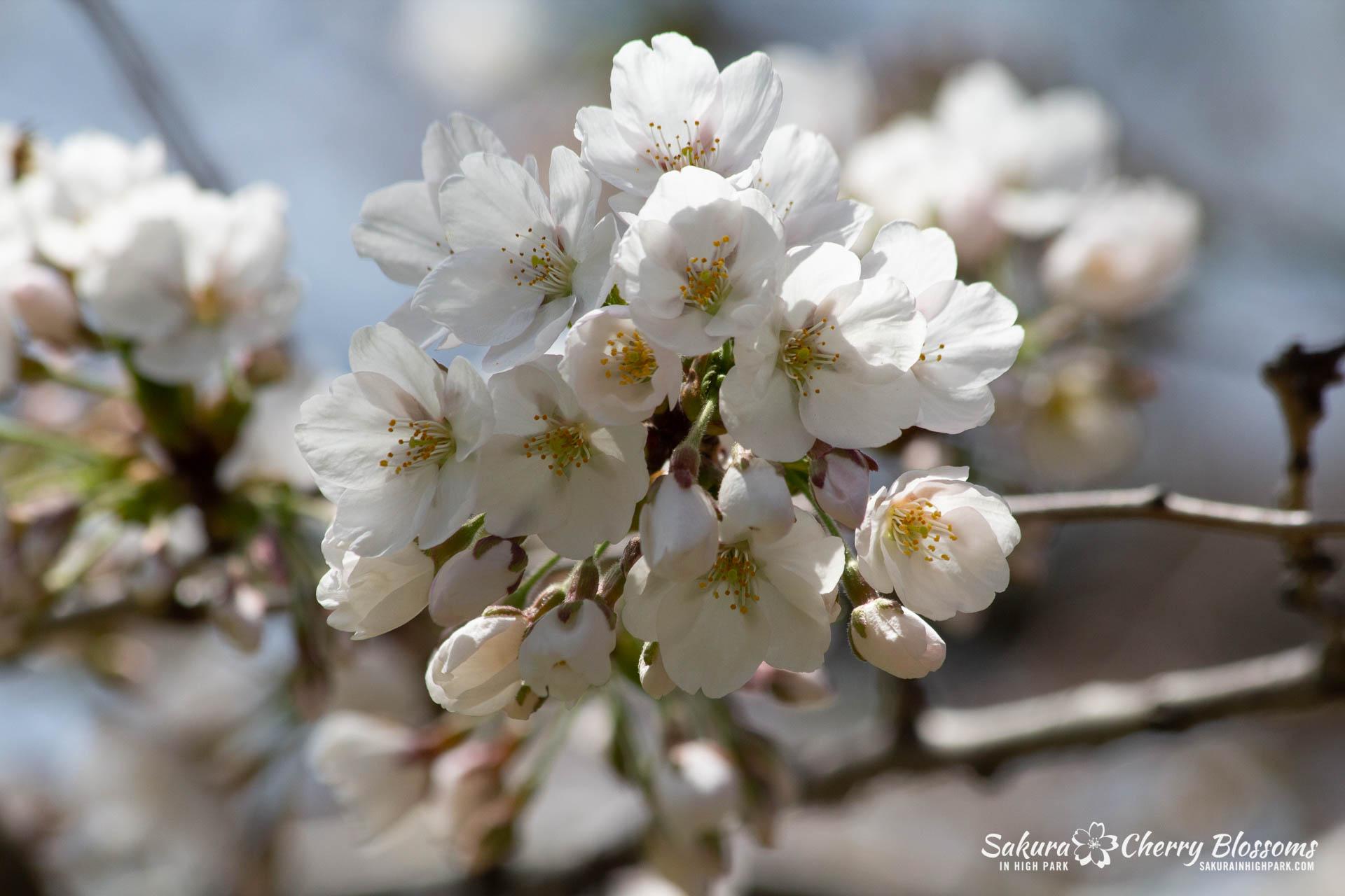 Sakura-Watch-May-5-2018-41.jpg
