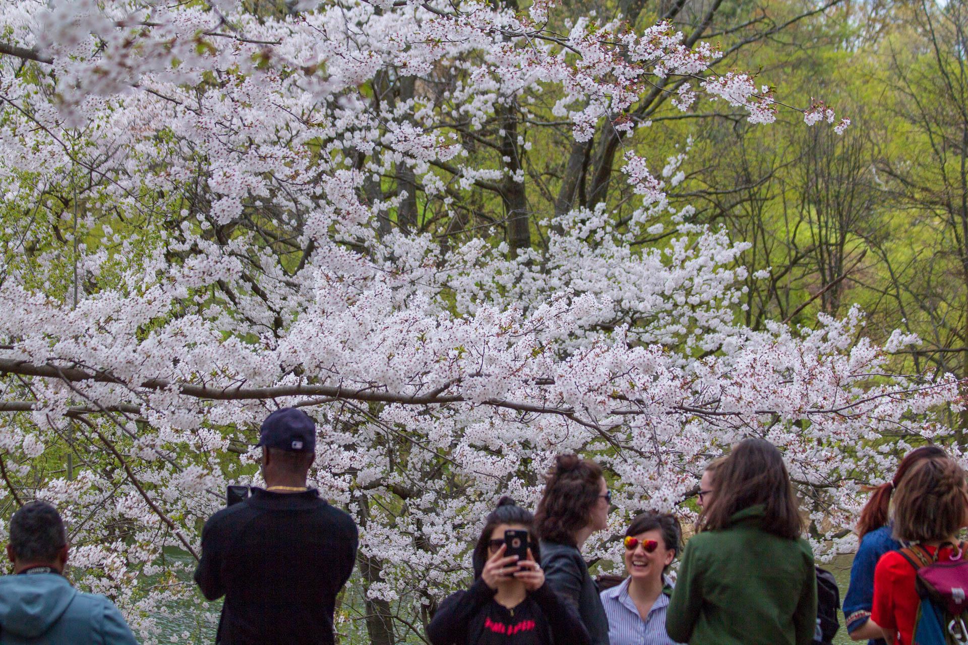 Sakura-Watch-May-10-2018-66.jpg