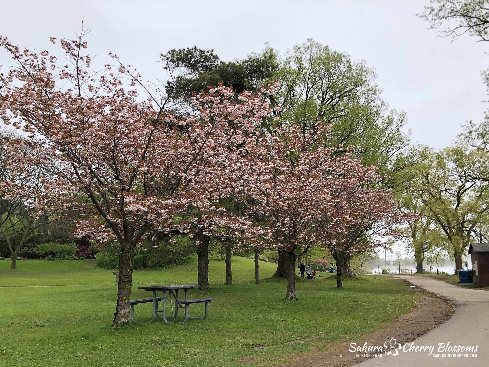Sakura-Watch-May-22-2018-31.jpg