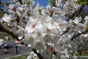 2015 BloomMay 5-10 -