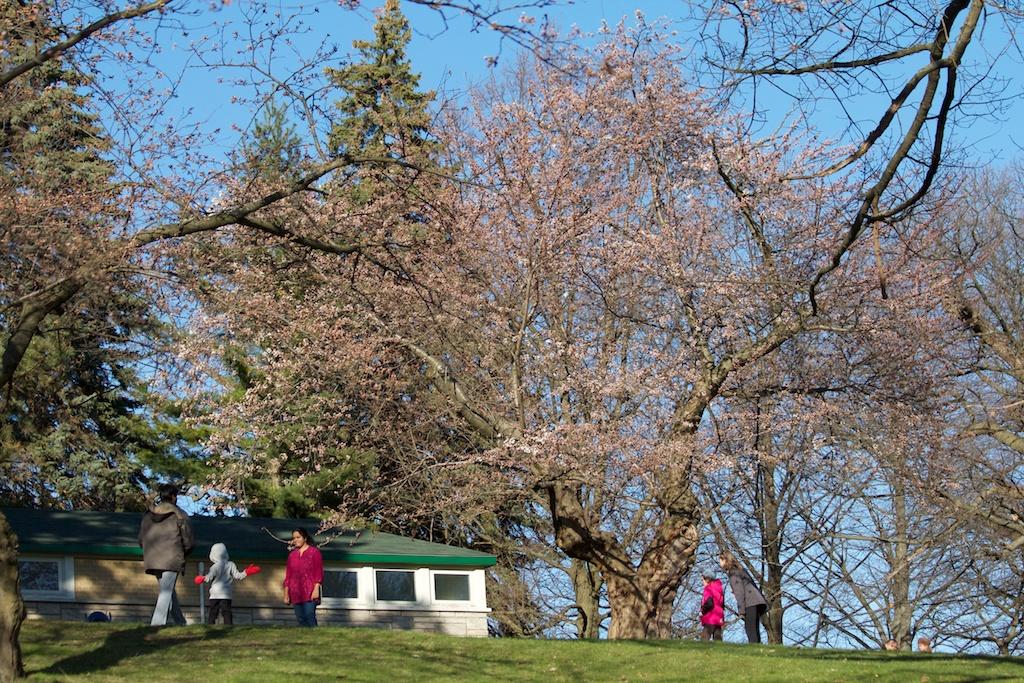 Sakura_318-2012-04-06.jpg