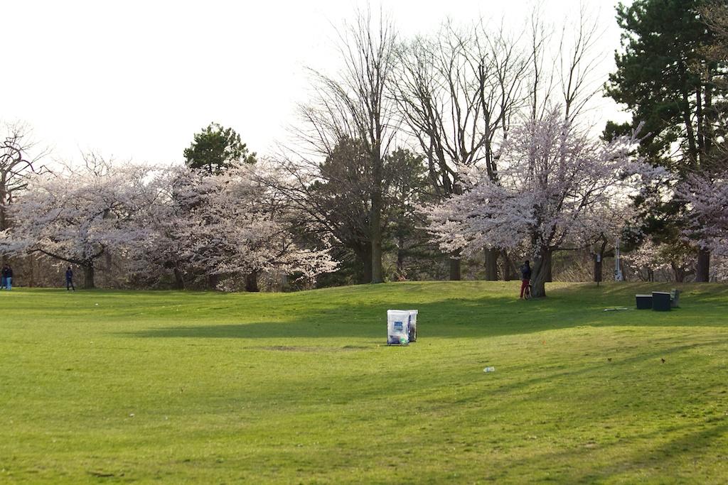 Sakura_351-2012-04-09.jpg