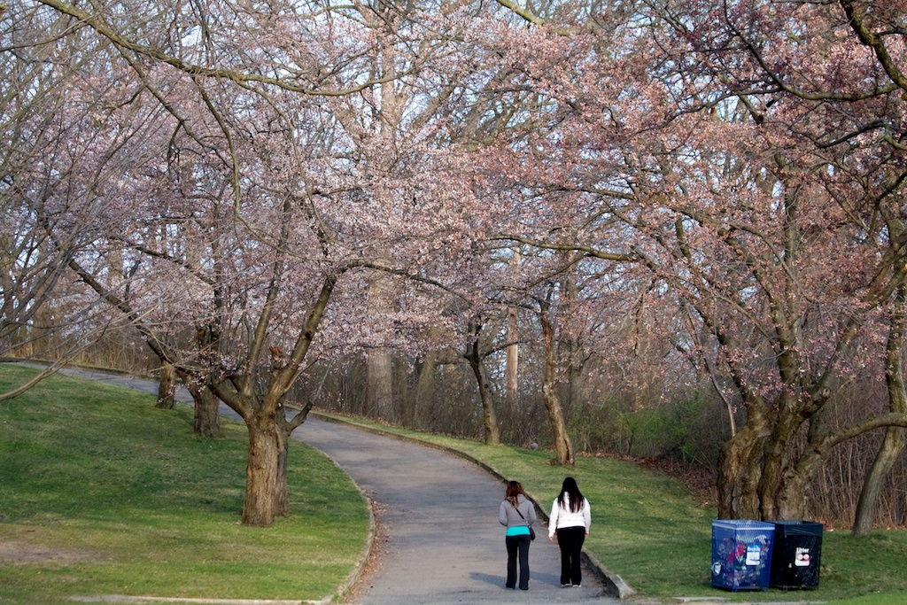 Sakura_541-2012-04-09-1.jpg