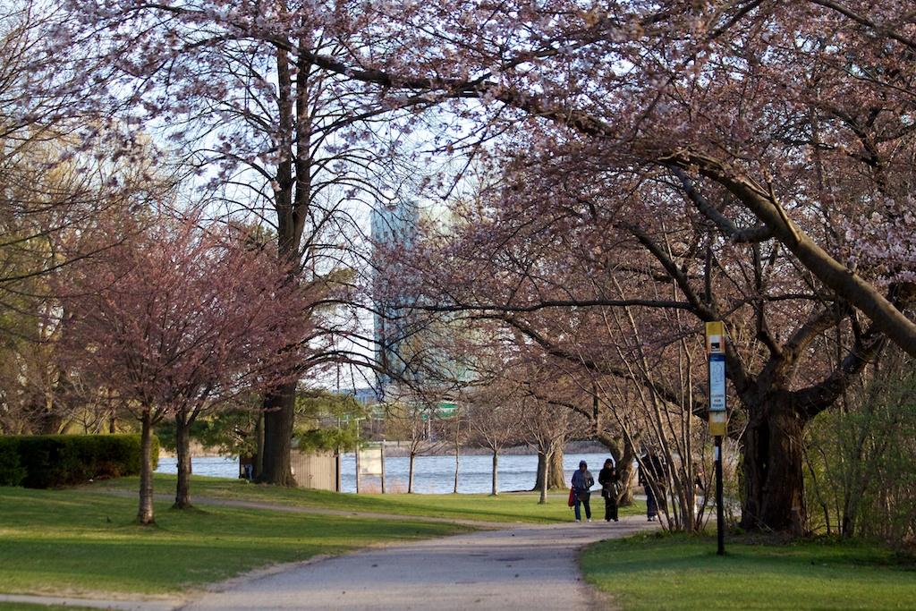 Sakura_502-2012-04-09.jpg
