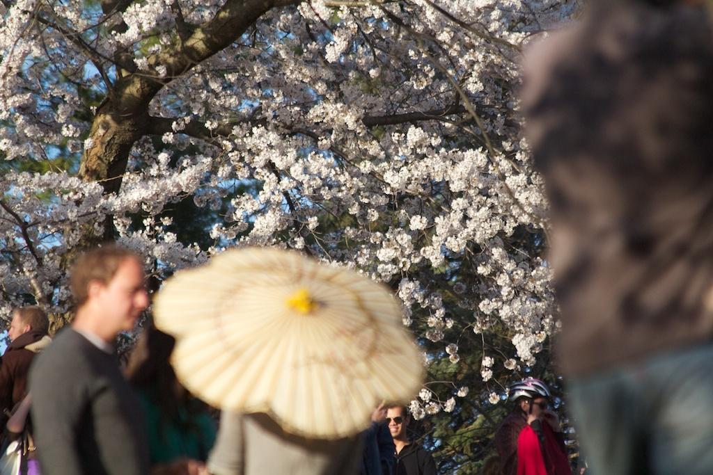 Sakura_688-2012-04-13.jpg