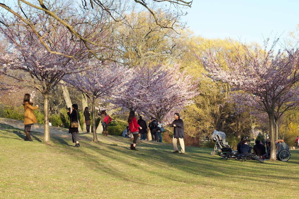 Sakura_747-2012-04-13.jpg