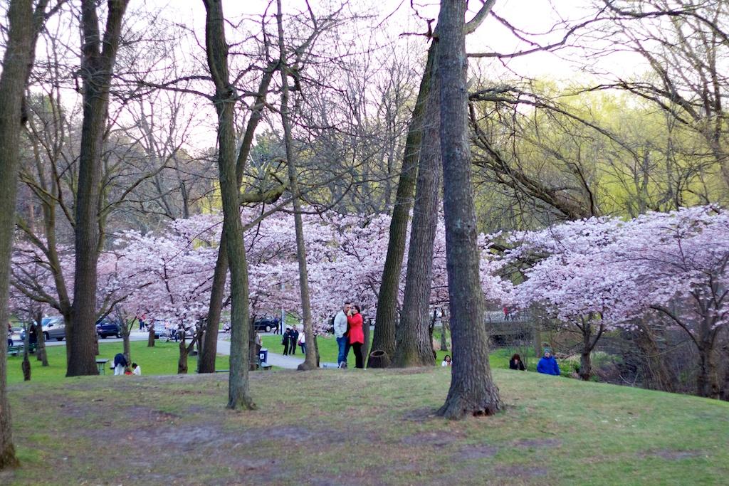 Sakura_836-2012-04-13.jpg