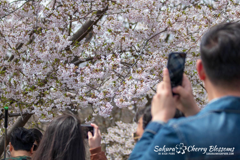 sakura watch may 11-2019-82.jpg