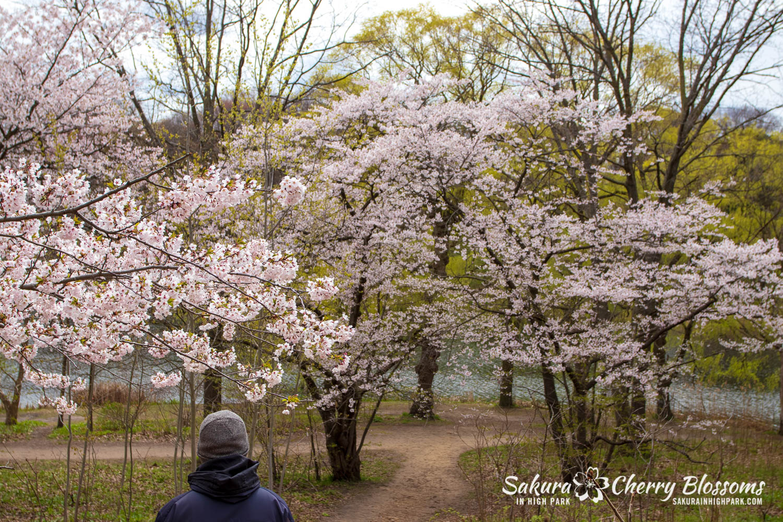 sakura watch may 14-2019-294.jpg