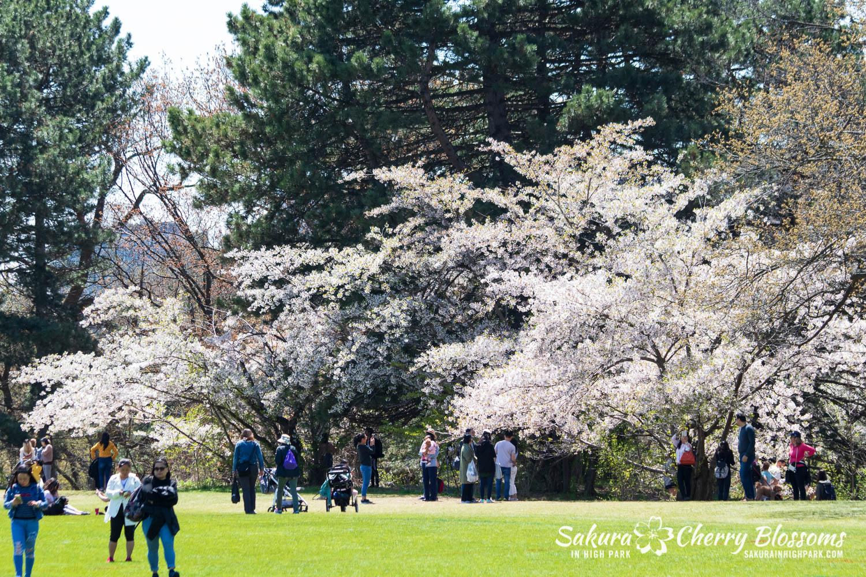 sakura watch may 17-19-27.jpg