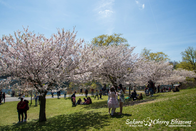 sakura watch may 17-19-236.jpg