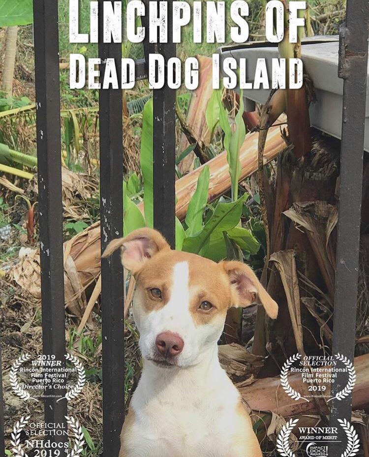 Watch the incredible story of 6 women who will stop at nothing to save the stray dogs of Puerto Rico. -