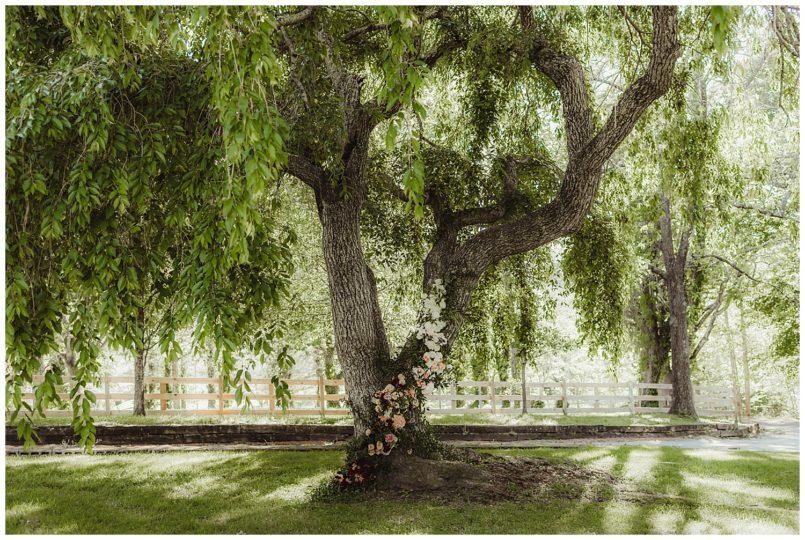 handd-tree.jpg