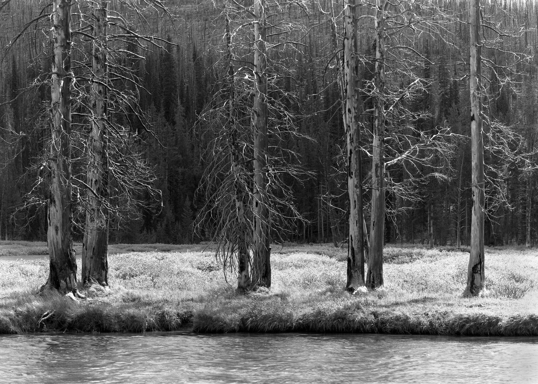 072_Seven_Trees.jpg